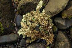 Beau lichen sur le lit de la rivière photo stock
