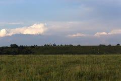 Beau llandscape roumain avec des vaches et une église dans le backgr photographie stock libre de droits