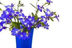 beau lobelia de fleurs Photographie stock