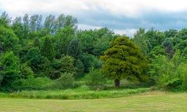 Beau mélange des arbres verts écossais photos libres de droits