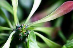 Beau macro de cactus ornemental de chanvre photos libres de droits