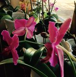 Beau magnifique de beau groupe d'orchidée Photos stock