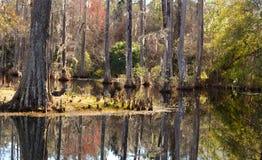 Beau marais de Cypress Photographie stock