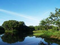 Beau matin en parc public avec le champ d'herbe verte Photo libre de droits