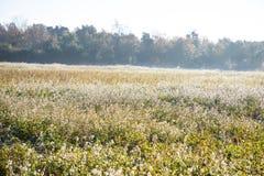 Beau matin ensoleillé au-dessus de champ en hiver photos libres de droits
