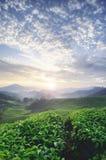 Beau matin pendant le lever de soleil à la ferme de thé arbre de thé vert couche renversante de la colline et des nuages dramatiq image libre de droits