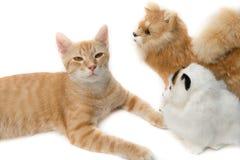 Beau mignon de chat sur le fond blanc Images stock