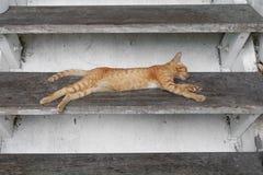Beau mignon de chat sur le fond blanc Image libre de droits