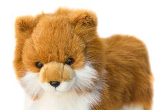 Beau mignon de jouet de Dolly Dog sur le fond blanc Image stock