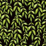 Beau modèle d'aquarelle avec les feuilles vertes Photo stock
