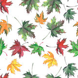 Beau modèle de feuilles d'automne sans couture Photo stock