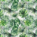 Beau modèle de fines herbes floral merveilleux tropical vert clair d'été d'Hawaï d'aquarelle de paumes Photo stock