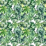 Beau modèle de fines herbes floral merveilleux tropical vert clair d'été d'Hawaï des paumes d'un monstera Photographie stock