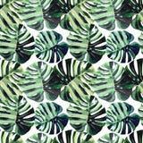 Beau modèle floral merveilleux tropical de fines herbes vert lumineux d'été d'Hawaï d'une aquarelle tropicale de palmettes illustration de vecteur