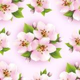 Beau modèle sans couture avec la fleur de Sakura Photos stock