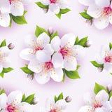 Beau modèle sans couture avec Sakura blanc Photographie stock libre de droits