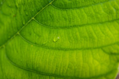 Beau modèle vert de texture de feuille Photos libres de droits