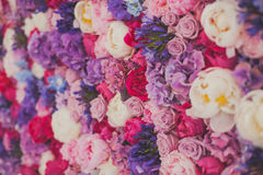 Beau mur fait de fleurs pourpres violettes rouges, roses, tulipes, presse-mur, fond Photo libre de droits