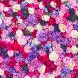 Beau mur fait de fleurs pourpres violettes rouges, roses, tulipes, presse-mur, fond Image libre de droits