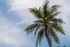Beau palmier dans le soleil tropical avec l'espace des textes Image libre de droits