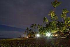 Beau palmier dans les Caraïbe Photographie stock libre de droits