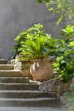 Beau palmier dans un pot d'argile Image libre de droits