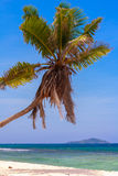 Beau palmier solitaire Images libres de droits