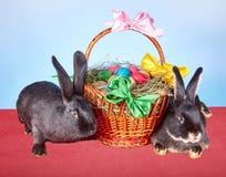 Beau panier avec des oeufs de pâques et deux petits lapins Images libres de droits
