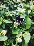 Beau papillon Photos libres de droits