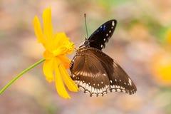 Beau papillon Images libres de droits