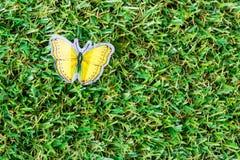 Beau papillon Photos stock