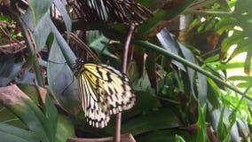 Beau papillon blanc sur une feuille banque de vidéos