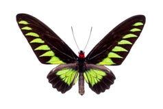 Beau papillon coloré d'isolement sur le blanc Photos stock