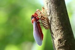 Beau papillon coloré en nature Images libres de droits