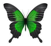 Beau papillon d'isolement sur un fond blanc Photographie stock libre de droits