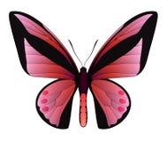 Beau papillon d'isolement sur un fond blanc Image libre de droits
