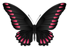 Beau papillon d'isolement sur un fond blanc Image stock