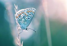 Beau papillon dans un environnement naturel photos stock