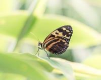 Beau papillon orange et jaune sur les usines vert clair Image stock