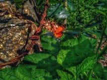 Beau papillon orange prenant un bain de soleil et alimentant photographie stock