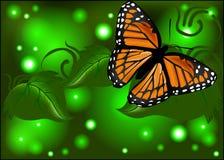 Beau papillon sur un fond rougeoyant image stock
