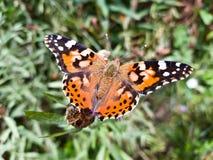 Beau papillon sur une branche d'usine un jour d'été photo stock