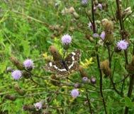 Beau papillon sur une fleur dans un jardin Photos stock