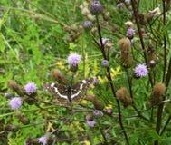 Beau papillon sur une fleur dans un jardin Image libre de droits