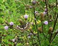 Beau papillon sur une fleur dans un jardin Photographie stock