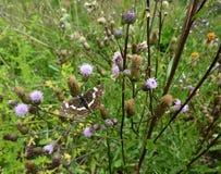 Beau papillon sur une fleur dans un jardin Images stock
