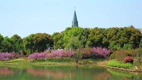 Beau parc avec des arbres, buissons, herbe, chemin de jardin, ?tang un jour ensoleill? banque de vidéos