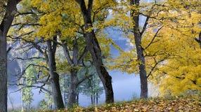 Beau parc d'automne Photographie stock libre de droits