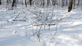 Beau parc d'hiver avec différents arbres Images stock