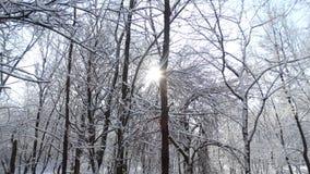 Beau parc d'hiver avec différents arbres Photos stock